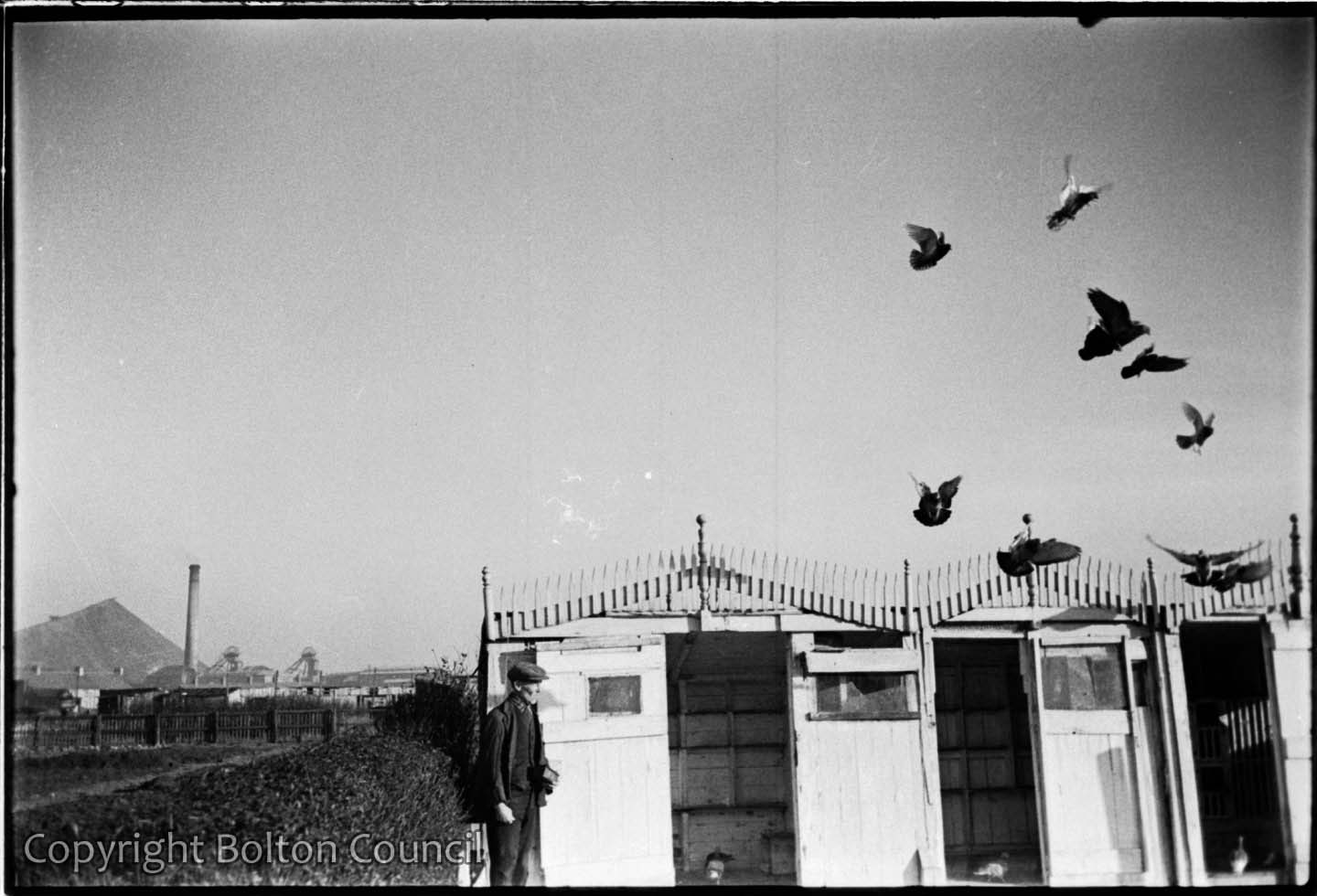Racing Pigeons by Humphrey Spender | Bolton Worktown