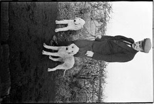 Bedlington Terriers