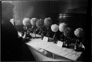 Prize Winning Flowers